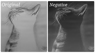 Negative Drawing of a Black Cat - Timelapse sketch