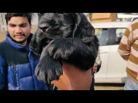 Dog Market Karnal - 9319811881-  Doggyz World