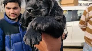 Dog Market Karnal - 9728011133,7404011155,9896504757,  Doggyz World