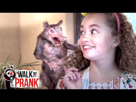 Rat Cake | Walk the Prank | Disney XD