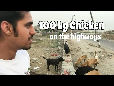FEEDING All the DOGS in Delhi! | Wildly Indian