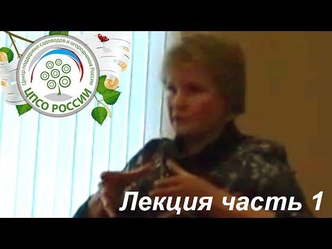 Флоксы саженцы — Ромашка 96