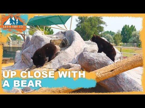 Visiting Yellowstone Bear World