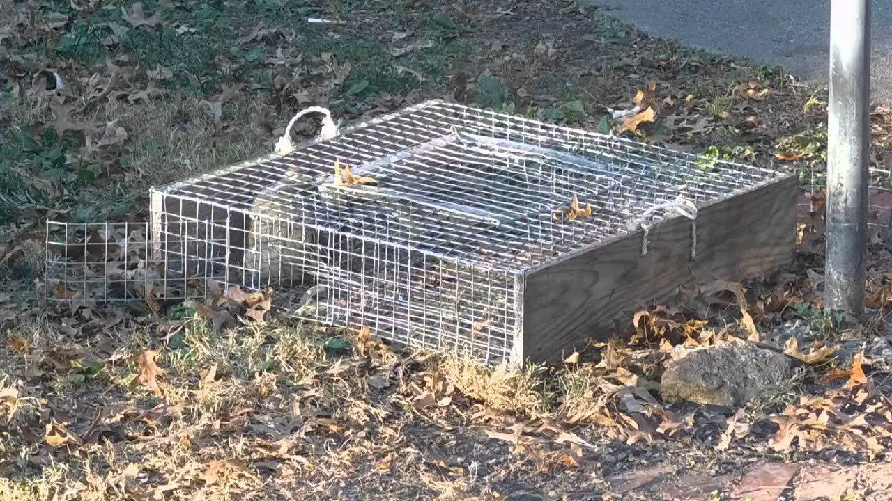 Repeating squirrel trap - YouTube