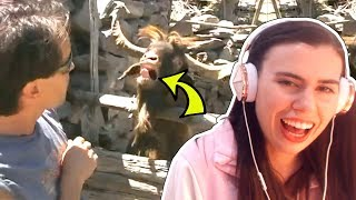 MAN YELLS AT GOAT AND IT SPITS IN HIS FACE!!!