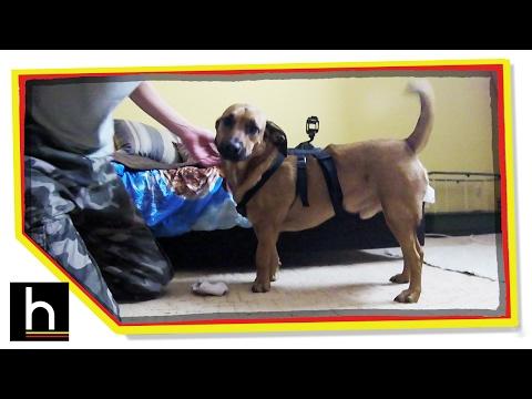 GoPro Kutyahám mount letöltés