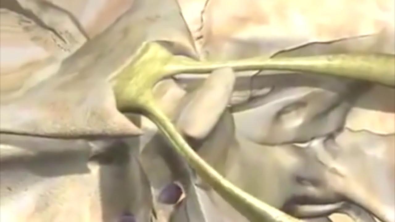 Resumen en 3d de todos los pares craneales youtube for 12 paredes craneales
