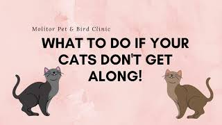 What To Do If Your Cats Don't Get Along!