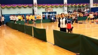 2015 A grade羽毛球精英賽冠軍戰第一單