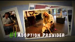 Charleston Animal Society: Adoptions