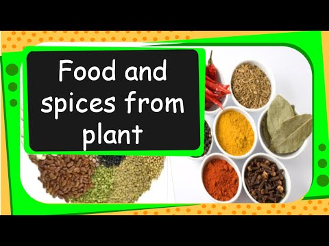 Science Food From Plant English Youtube