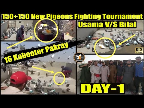 Usama V/S Bilal 150+150 New Pigeons Fighting Tournament |16 Kabooter Pakray/Catching Pigeons DAY-1 from YouTube · Duration:  45 minutes 4 seconds