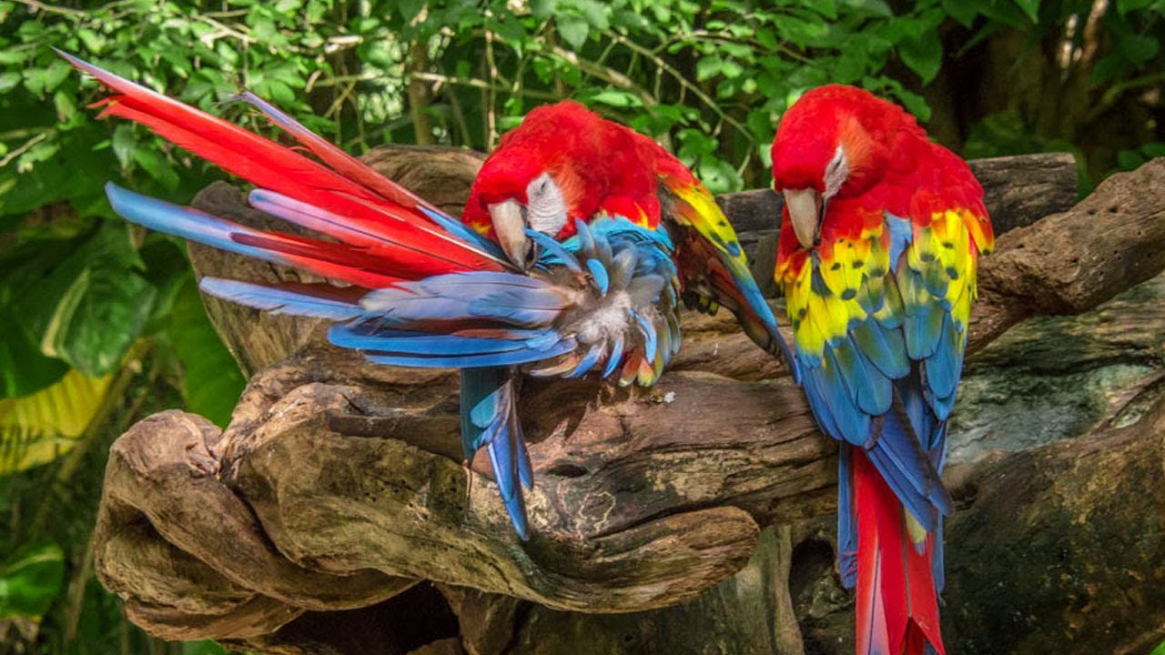Top 10 Most Beautiful Birds In The World Video | Beautiful Animals And Birds