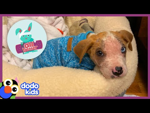 All Better — Itchy Puppy With Hurt Skin Needs Help To Play Again | Dodo Kids