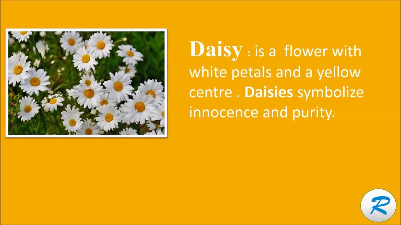 How To Pronounce Daisy Daisy Pronunciation Daisy Meaning Youtube