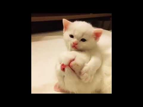 funny pets for cat #2 Animal 2018