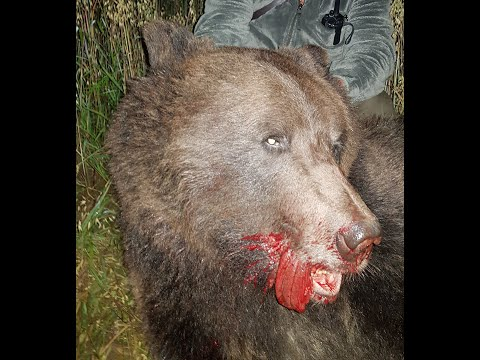 Охота на Медведя на овсах 2019 год Медвежья гора!
