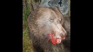 Охота на Медведя на овсах 2019 год