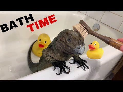 BATH TIME FOR GIANT PET LIZARD !!
