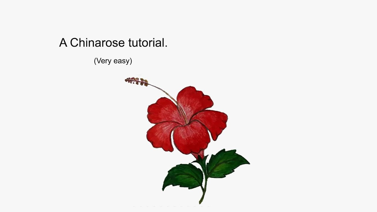 How To Draw Hibiscus Flower Youtube