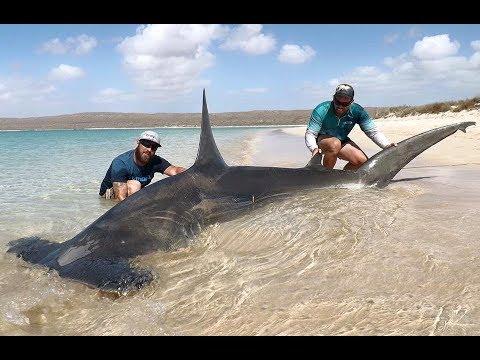 ЧЕЛЮСТИ. К огромными акулам без клетки. В Африке всем пофиг на безопасность!
