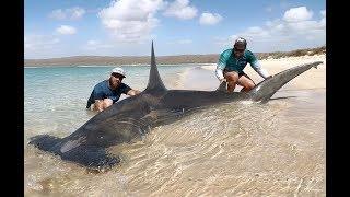 Ныряем в океане с акулами, БЕЗ клетки! В Африке всем пофиг на безопасность!