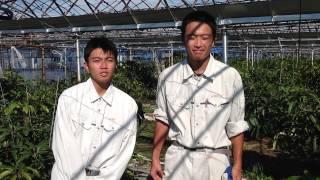 鹿本農業高校実習