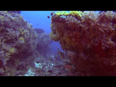 HP Reef, North Male Atoll, Maldives - Soft Coral Kingdom