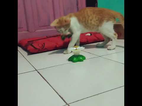 Cat Doo Doo