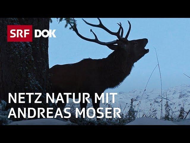 Schweizerischer Nationalpark – 100 Jahre Einsamkeit | NETZ NATUR mit Andreas Moser | Doku | SRF DOK