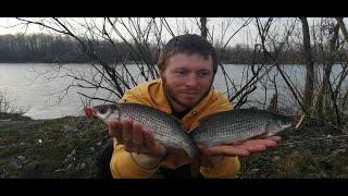 Ловля плотвы на Десне в апреле Трудовая рыбалка на фидер