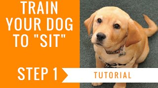 How To Train Your Dog To Sit: Step 1 Tutorial