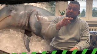 Inscope isst Baby Delfin   Statement von Matthias Clemens