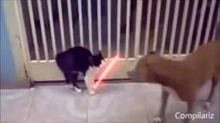 Самые тупые коты 2014. Most stupid cats
