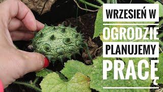 Wrzesień w ogrodzie, jakie prace na nas czekają? Ekologiczny ogród warzywny. Uprawa  | www.Kasia.in