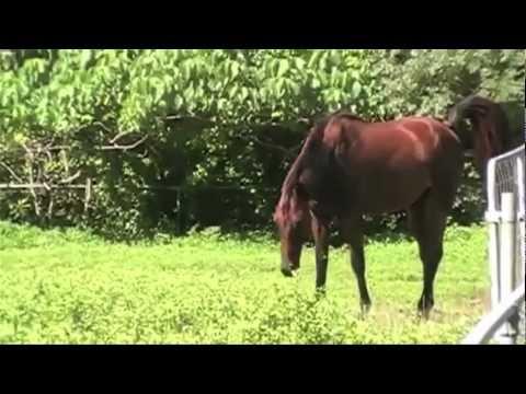 War Horse Shit