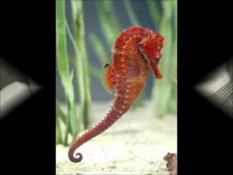 The seahorses do it yourself i want you to know youtube the seahorses do it yourself i want you to know solutioingenieria Image collections