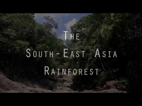 The South East Asia Rainforest