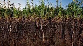 видео Агроэкологическая характеристика земель