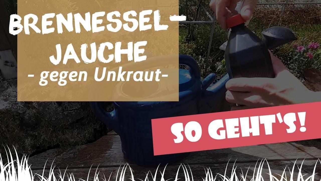 Brennnesseljauche Gegen Unkraut: So Funktioniertu0027s | Garten Und Freizeit.de