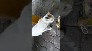 Feeding the homeless cats p1