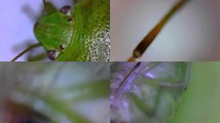 석정반 - 디지털현미경으로 본 곤충 (정밀정반)