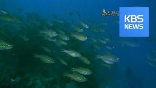 [뉴스광장 영상] 바닷속 여행 / KBS뉴스(News)