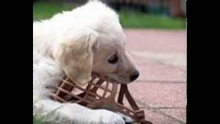 Намордники для маленьких собак.   Купить по лучшей цене
