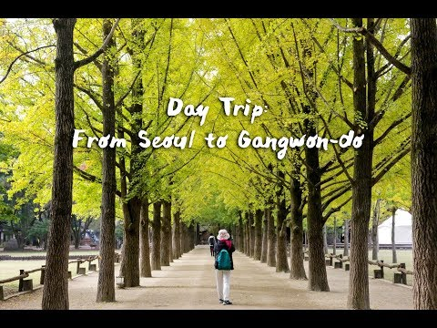 Perfect Seoul Day Trip: Nami Island, Petite France, Gangchon Rail Park and Garden of Morning Calm