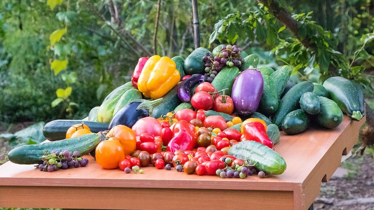Permaculture Gardening Harvest, Backyard Sustainable Food ...