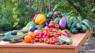 Permaculture Gardening Harvest, Backyard Sustainable Food Forest