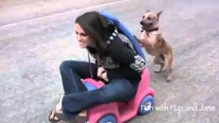 Spacy.Tv - Собака подрабатывает мотором