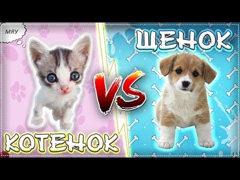 БЕЗДОМНЫЙ КОТЕНОК VS БЕЗДОМНЫЙ ЩЕНОК / Котенок против щенка