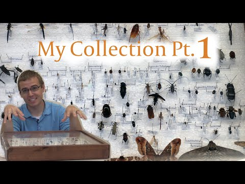My Insect Collection Part 1